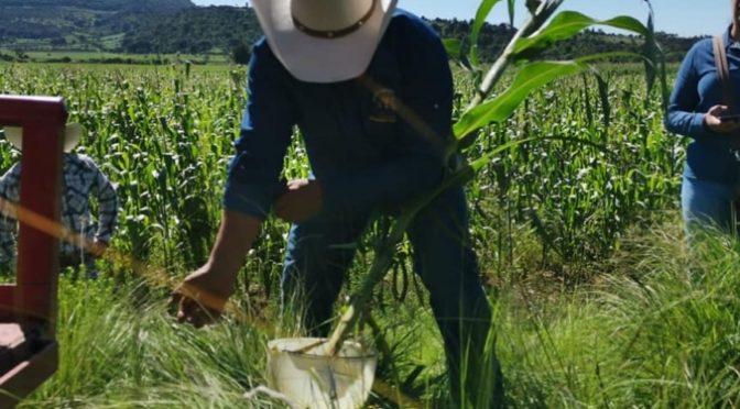 México-Productores orgánicos apoyan a AMLO (Al Momento)