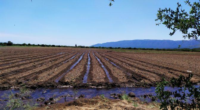 SLP: San Luis Agua abrió el plazo para realizar la Intención de Siembra Otoño- Invierno 2021 (Agencia de Noticias San Luis)