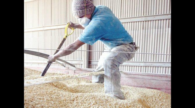 México: Bajo nivel de agua almacenada para riego limitará producción de maíz: CCI (La Jornada)
