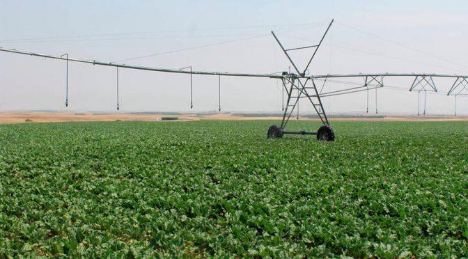 España: Apoyo al recurso que se presentará sobre los recortes de agua para el regadío del Alto Guadiana (agroinformacion.com)