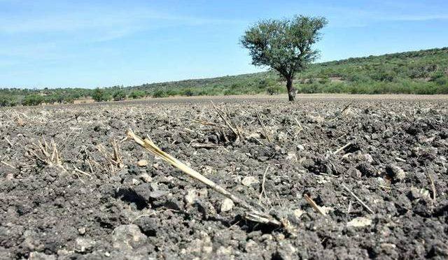 Guanajuato: Sufren módulos de riego por falta de agua (Noticias Vespertinas)