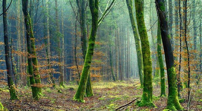 El papel de los bosques como sumideros de carbono (Ambientum)