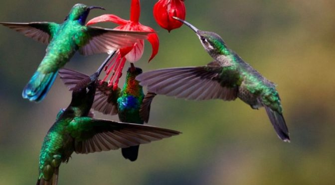 Hoy es día Día Mundial de la Vida Silvestre (Portal Ambiental)
