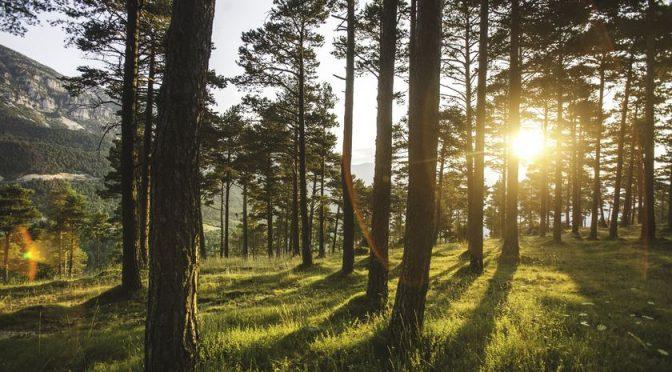 Los bosques, el pulmón verde que da aire a la lucha contra el cambio climático (La razón)