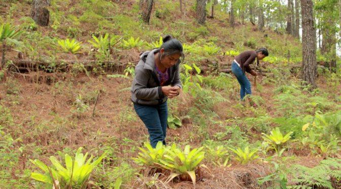 México: Impulsan la participación de las mujeres en el sector forestal (Portal Ambiental)