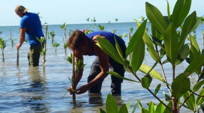 Un proyecto de medio ambiente protegerá la costa sur de Cuba frente al cambio climático (News UN)