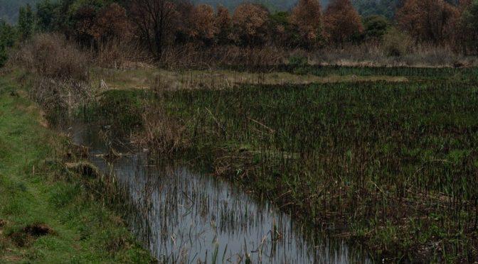 Chiapas aporta 30% del agua del país. Ríos, agua subterránea. ¿Por qué sus habitantes tienen sed? (Sin Embargo.mx)