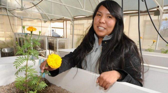 Chihuahua: Esta mujer rarámuri logró filtrar el agua sucia gracias a un cempasúchil y un crisantemo (El Heraldo de México)