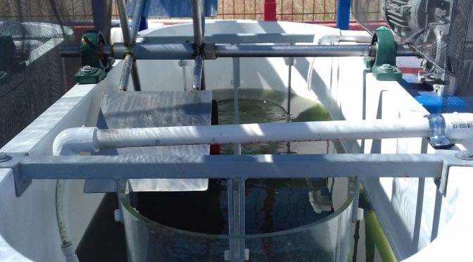 México: Analizan el metabolismo de microalgas y bacterias para tratamiento de agua (Portal Ambiental)
