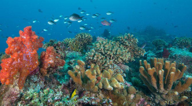 Los océanos están más amenazados que nunca, advierte la Organización Meteorológica Mundial (Noticias ONU)