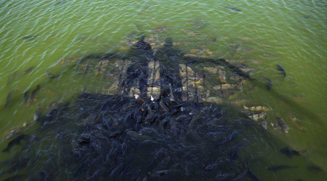 """""""Los humanos tienen un papel dominante en el ciclo del agua"""" (La Jornada)"""
