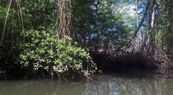 "México:""Hay algo que está matando a los árboles de mangle"" (Crítica)"