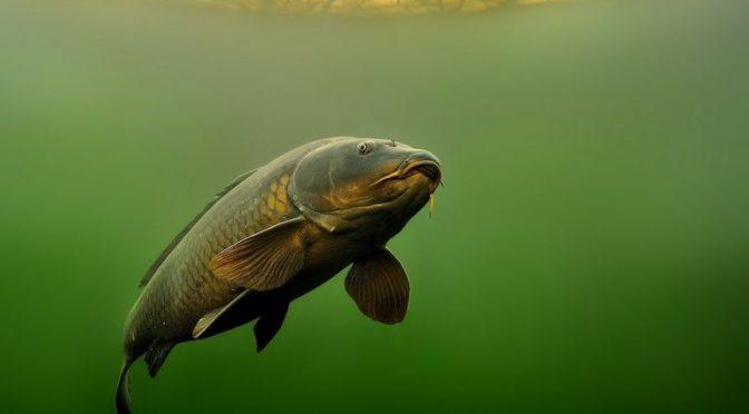 Más de la mitad de los hábitats de ríos del mundo están contaminados (Meteored)