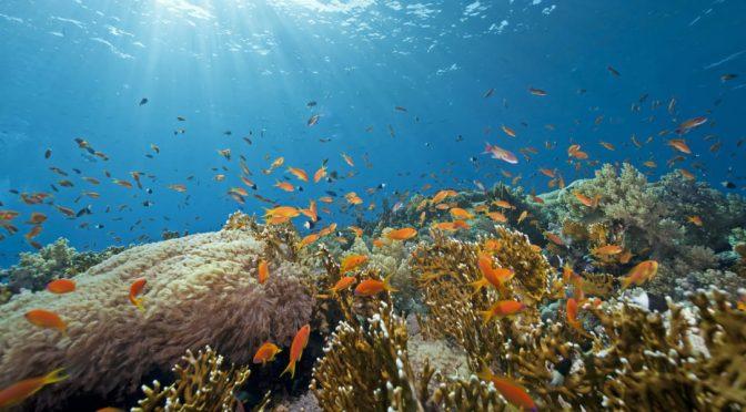 Proteger zonas oceánicas concretas para dar soluciones globales (El Ágora Diario)