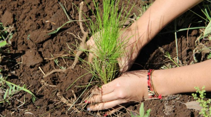 Michoacán: Entre sequía y cambio climático, agonizan hasta 18 millones de plantas en Michoacán (La Voz)