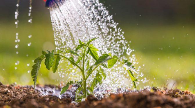 España: Una agricultura más sostenible, clave para salvar el agua (El Ágora Diario)