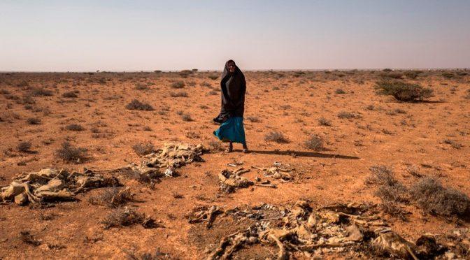 Mundo: La falta de lluvias amenaza el sustento de 2,7 millones de somalíes y su seguridad alimentaria (iagua.es)