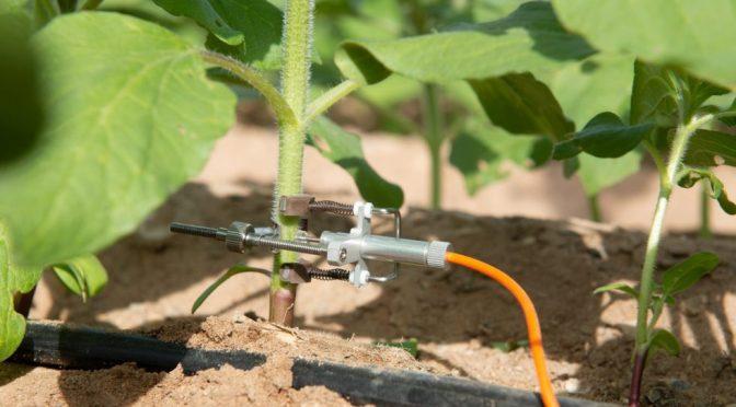 Riego inteligente, una nueva tendencia en el sector agrario en México (López-Dóriga Digital)