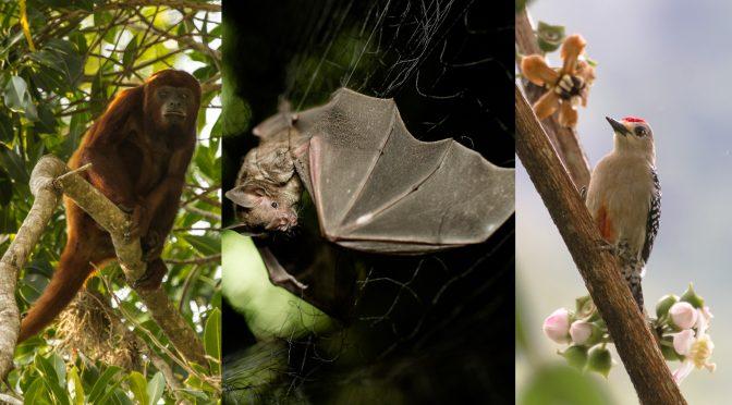 Boletín- Entre el 30 de abril y el 3 de mayo: ¡A reportar la biodiversidad colombiana sin poner en riesgo su salud! (Instituto Humboldt)