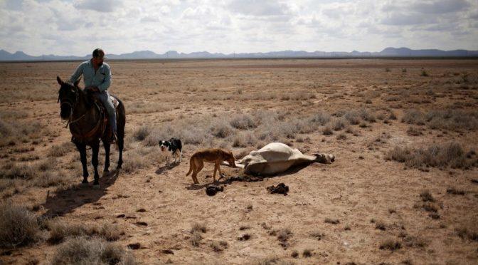 MX: La sequía abrasa el 83% del territorio de México (El País)