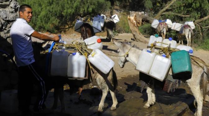 CDMX: Ante escasez habitantes de Xochimilco reparten agua con ayuda de burros (Debate)