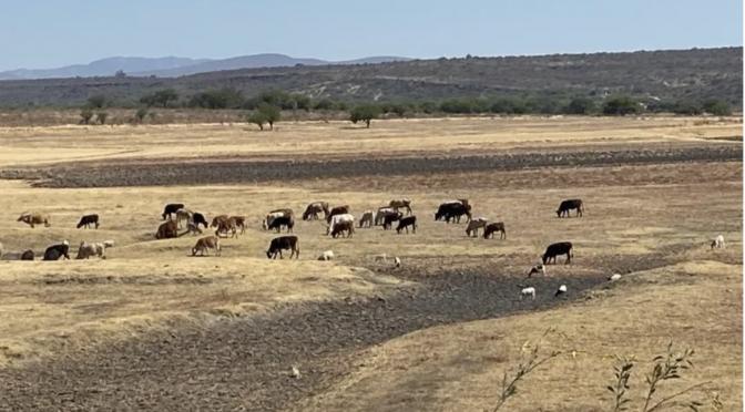 Gto: Todo Guanajuato sufrirá severa sequía este 2021 y urge no desperdiciar agua (AM.com)