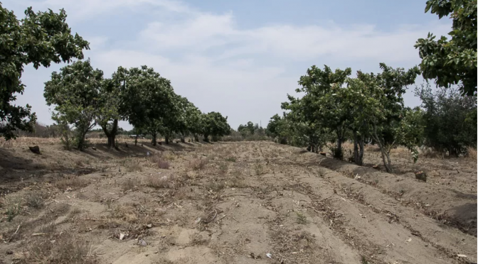 Puebla- Cambio climático y falta de acceso al agua: la realidad del campo poblano (Lado B)