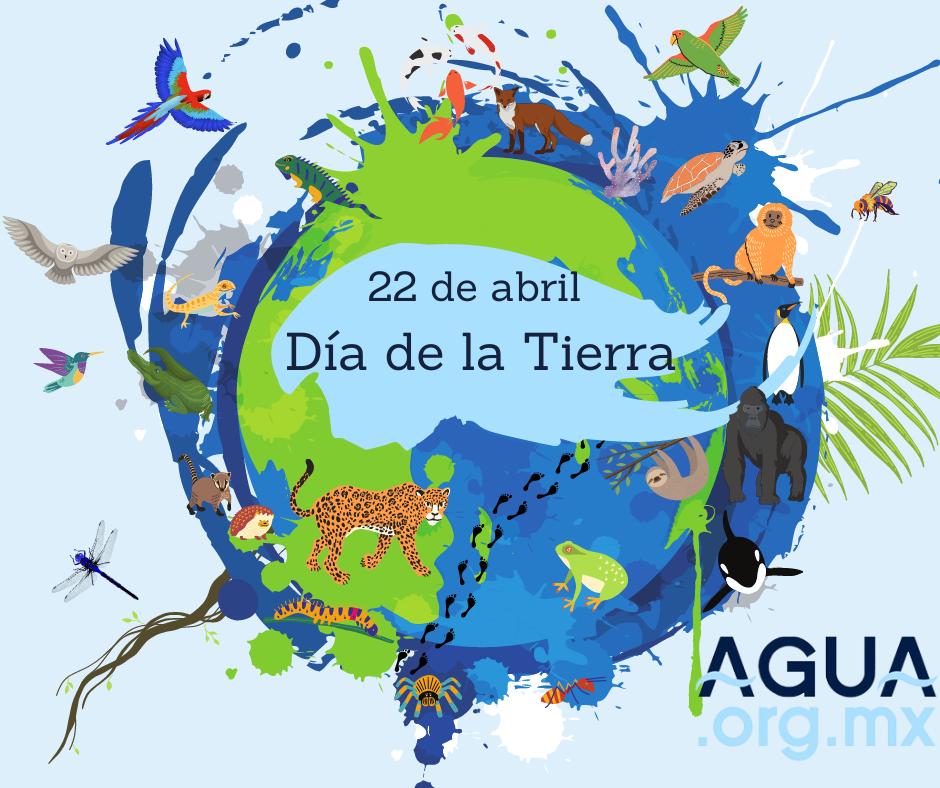 22 de abril Día de la Tierra: Un recuento de la situación actual de la naturaleza
