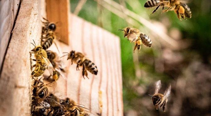 Las abejas indican la presencia de microplásticos en el medio ambiente (Portal Ambiental)