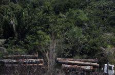 Río de Janeiro: Deforestación en la Amazonía brasileña rompe récord en marzo (Portal Ambiental)