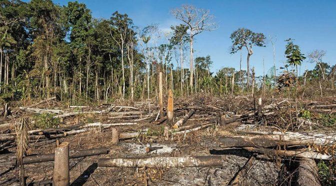El medio ambiente no es prioridad para AMLO; organismos tienen recortes de 37% (Forbes México)