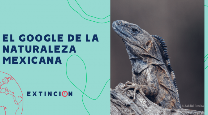 México- Conabio: El Google de la naturaleza mexicana (Sopitas.com)