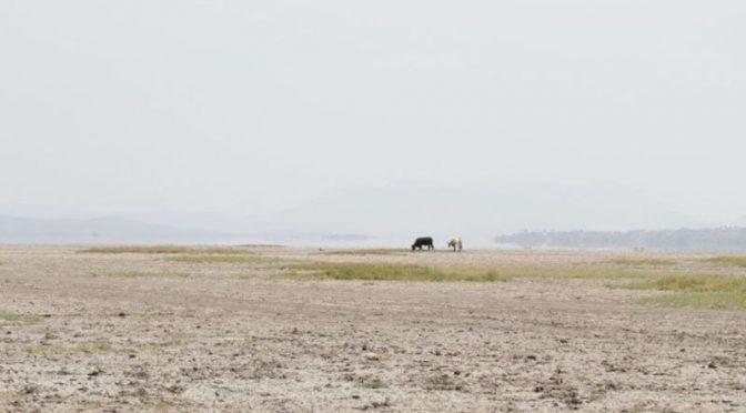 Mich: Activistas, académicos y pescadores piden a AMLO salvar el lago de Cuitzeo (Proceso)