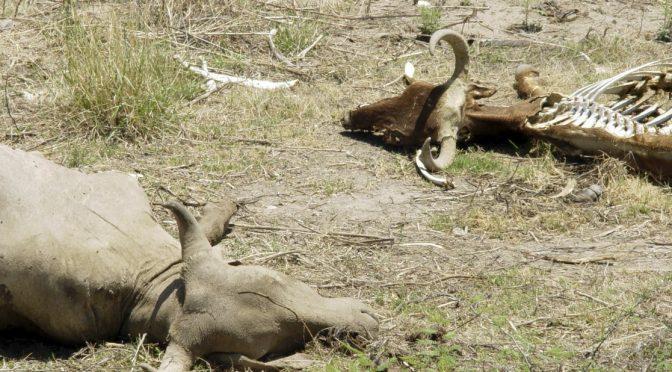 Chih: Se extienden los estragos por la sequía en el país (La Jornada)