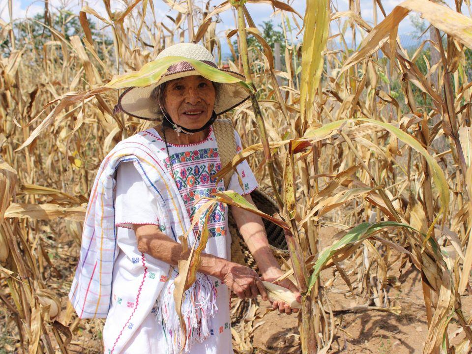 CDMX: Las milpas de México, la nueva serie de Conabio y Agricultura (Portal Ambiental)