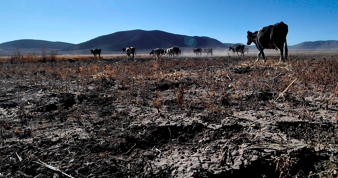 CDMX: La sequía se agudiza en México: casi 84% del país está afectado. Podría afectar el ciclo agrícola (Sin Embargo)