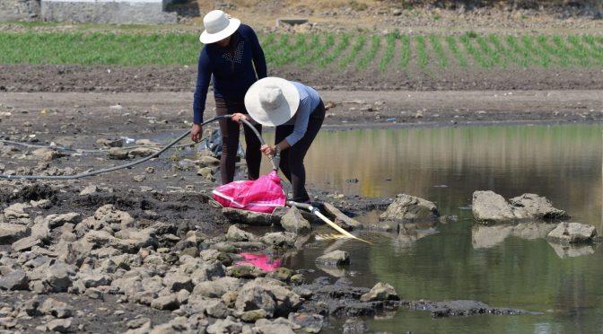 CDMX enfrenta su peor sequía en 30 años: campesinos buscan agua para no perder cultivos (Animal Político)