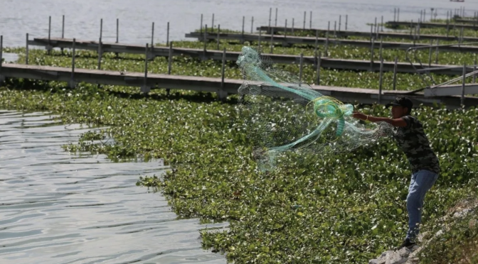 Guadalajara: Pese a inversión, empeora contaminación en laguna de Cajititlán, en Tlajomulco, Jalisco (Debate)
