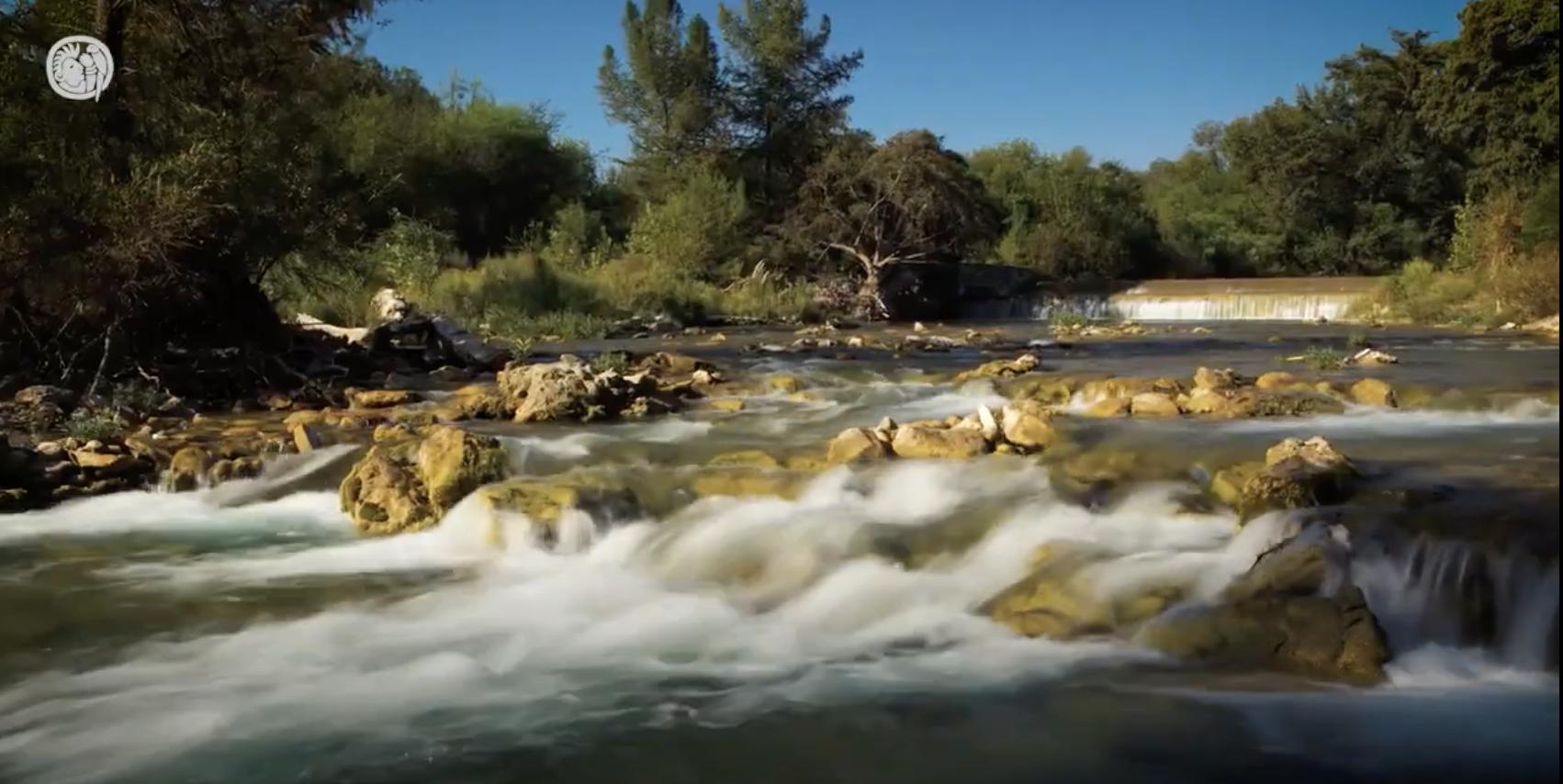 Mayo, mes de la naturaleza mexicana | Video