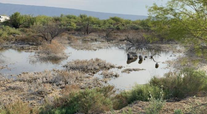 Denuncian destrucción de obras para salvar humedal de Cuatro Ciénegas, en Coahuila (Milenio)