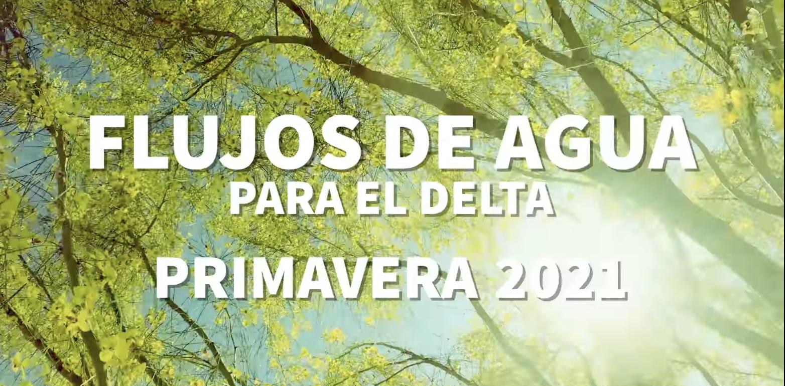 Flujos de agua primavera 2021   Video