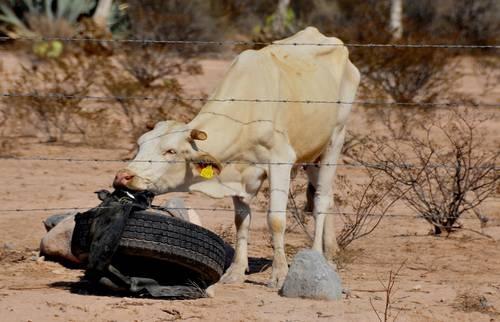 Nuevo León- Solicitarán declaratoria de emergencia por sequía en Nuevo León (La Jornada)