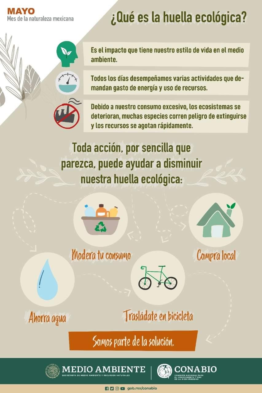 ¿Qué es la huella ecológica? (Infografía)