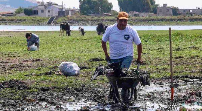 Ciudadanos limpian basura de la Laguna de Palmillas en Toluca (Toluca La Bella Cd.)