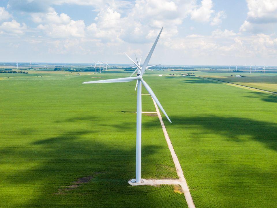 Cómo gestionar la transición energética para que no acabe con la biodiversidad (Portal Ambiental)