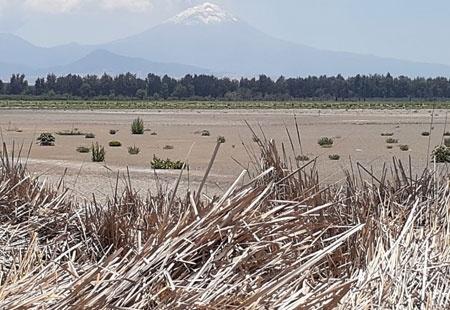 CDMX: Se secó parte de laguna en Tláhuac, santuario de aves (La Jornada)