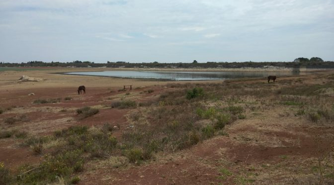 Hidalgo: en la presa Los Ángeles ya solo queda un charco de agua verde (La Jornada)