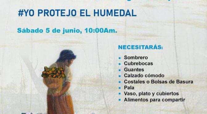 Jornada de Limpieza Chinampera (Coordinación de Pueblos, Barrios Originarios y Colonias de Xochimilco)