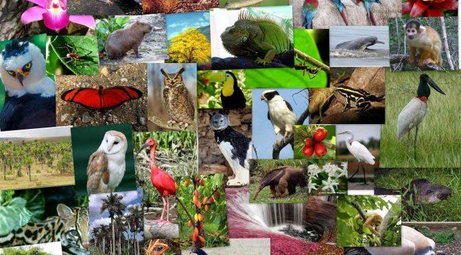 """México – """"Estamos en un límite severo para conservar la biodiversidad""""(Crónica)"""