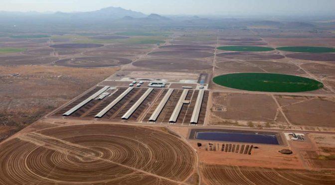Estados Unidos (nota en ingles)-Mega-lecherías, pozos que desaparecen y la crisis de agua cada vez más profunda de Arizona (The Guardian)